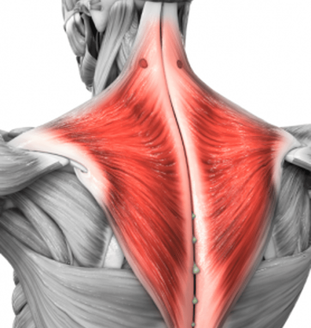 Suffering from tight shoulders, neck pain or headaches?